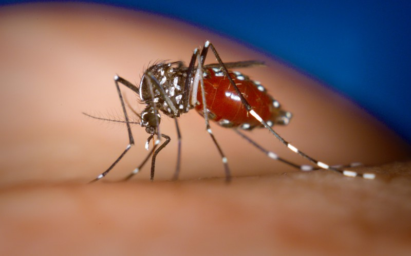 Chikungunya : 70 départements en alerte