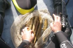 Le métal mythique de l'Atlantide enfin découvert ?