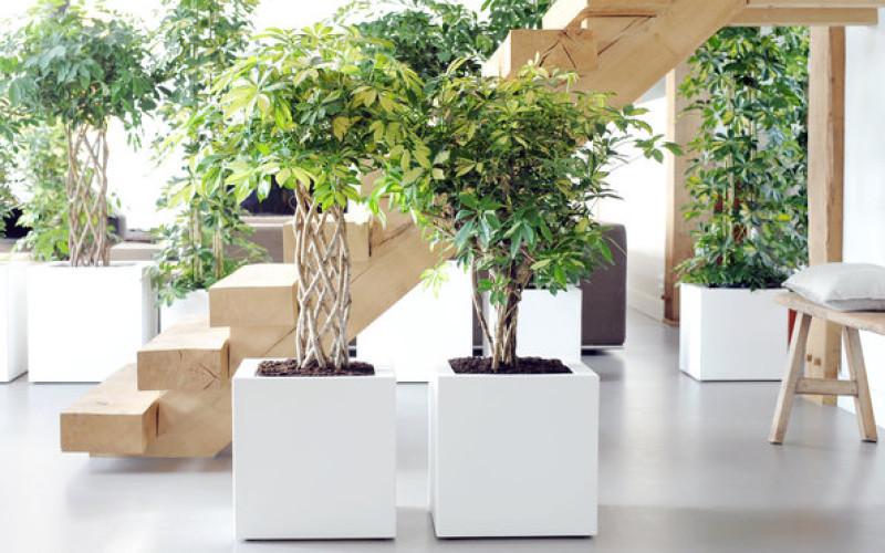 Purifier son intérieur grâce aux plantes !