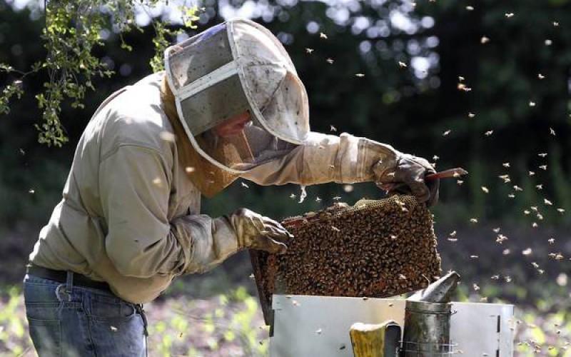Ma première ruche : comment la choisir, comment m'en occuper ?